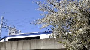 運転席からも眺めて見たい「春」