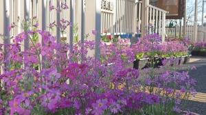 ピンク色の園