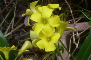 鮮やかな花の色彩