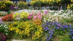 カラフルな花たち❀