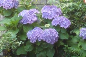 我が家の庭で