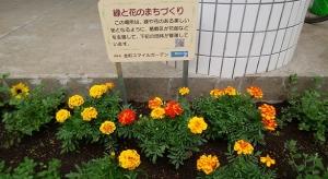 鮮やかな花