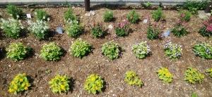 金町駅南口のもうひとつの花壇✿