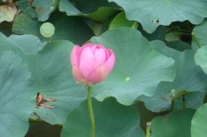 泥沼から美の最高峰の花が!
