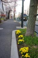 柴又街道のお花