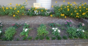 花いっぱい!!