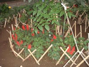 種から育てた花々