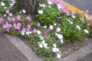 東金町中央自治会のまち花壇その2