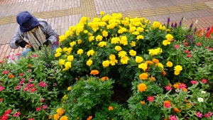 花を世話しながら