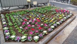 賑やかな花壇✿