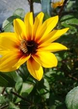 花の蜜をもとめて♪