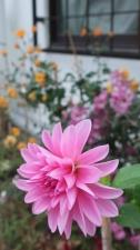 開花は夏かと・・・。