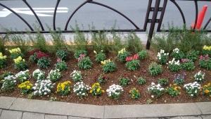 金町駅南口のもう一つの花壇✿