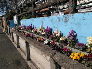 花いっぱいです(^_^)