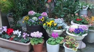 自慢の花壇