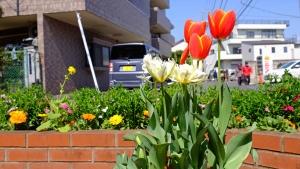 春、欠かせない花