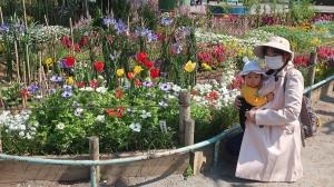 花を楽しみに