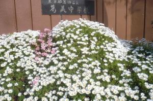 花いっぱいの校門