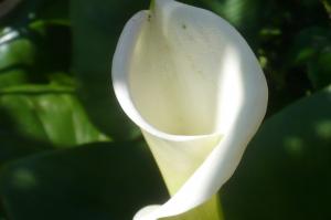 白い花が咲いている。それは。。。