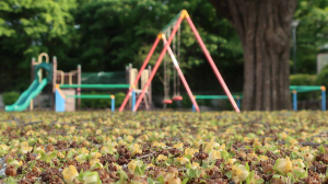 公園に絨毯?