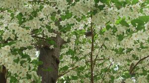 「桜」の次の花見かな