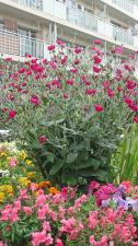 花壇で花束