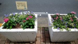 夏の花壇になりました✿