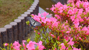 いつも花がある園、虫が見られる園に来てください。