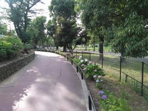 紫陽花の細道 2