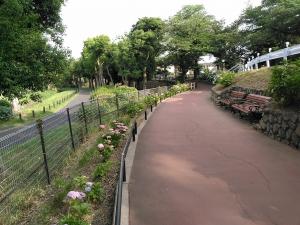 紫陽花の細道 3