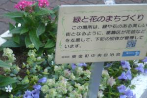 東金町中央自治会のお世話する花壇