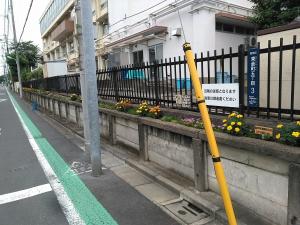 校舎の周りは花でいっぱい♬ 1