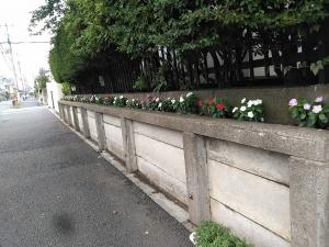 校舎の周りは花でいっぱい♬ 2