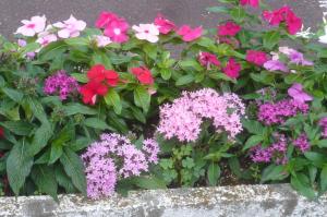 猛暑に咲く夏の花
