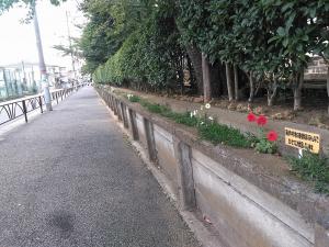 校舎の周りは花でいっぱい♬ 4