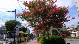街には花がある、活気がある。