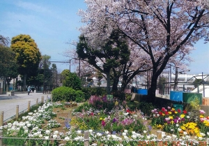 青戸平和公園花壇