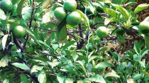 鎌倉4-27 緑道のもう一つの花壇