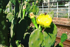 線路端の花壇 2