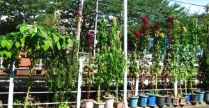 線路端の花壇 3