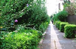 心休まる緑道