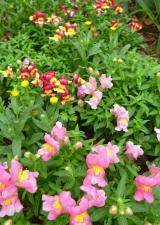 夏の花壇3