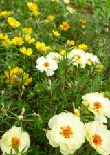 夏の花壇4
