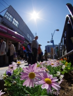 亀有駅北口の花壇です