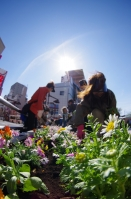 亀有駅南口の花壇