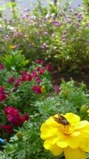 秋の花壇。
