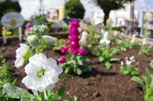 植え替えたばかりの花壇